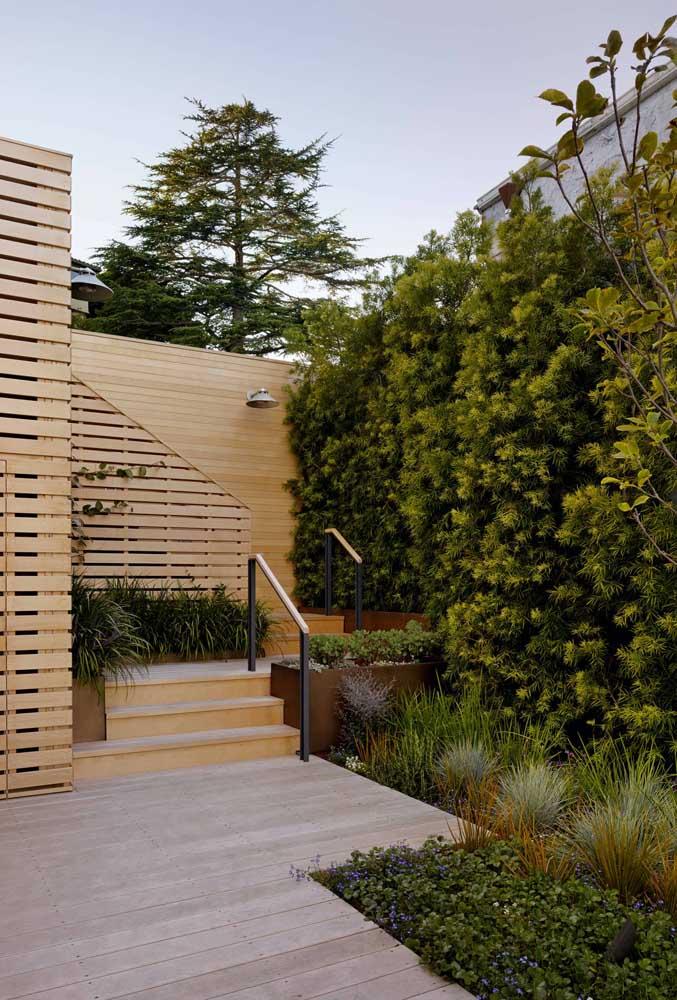 Cour arrière avec podocarpos près du mur.  Une excellente option pour les petits espaces