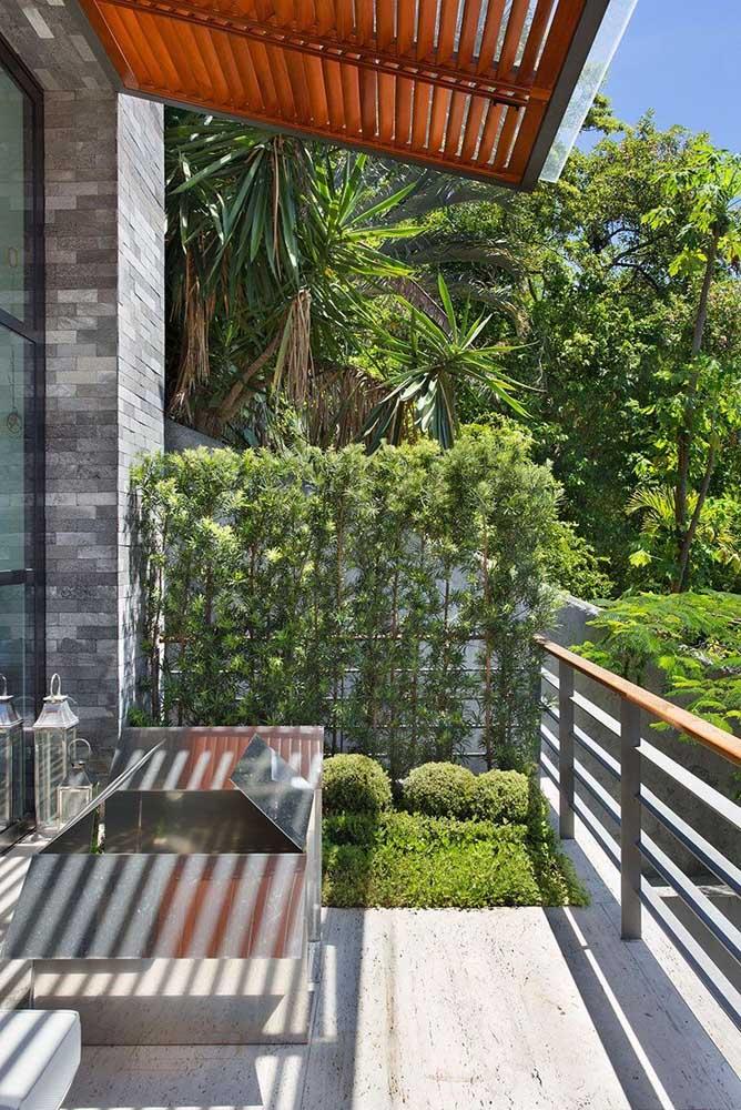 Ensemble de podocarpos formant un massif verdoyant entre le balcon et la cour