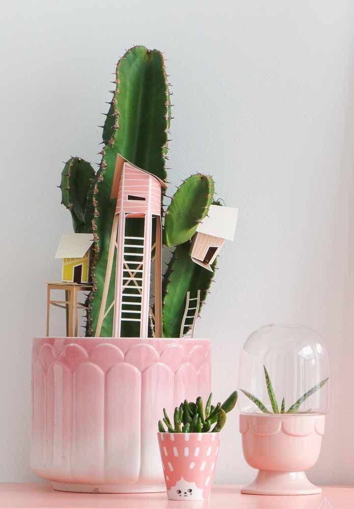 Pour l'ensemble des cactus et plantes succulentes, cache-pots roses
