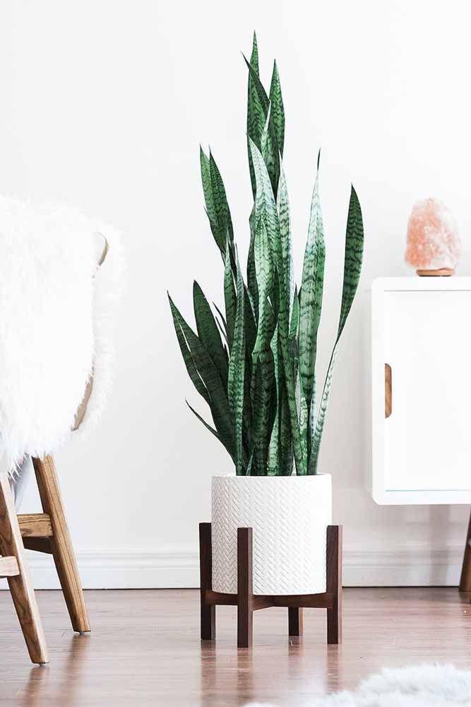 Le cache-pot blanc propre, neutre et toujours charmant