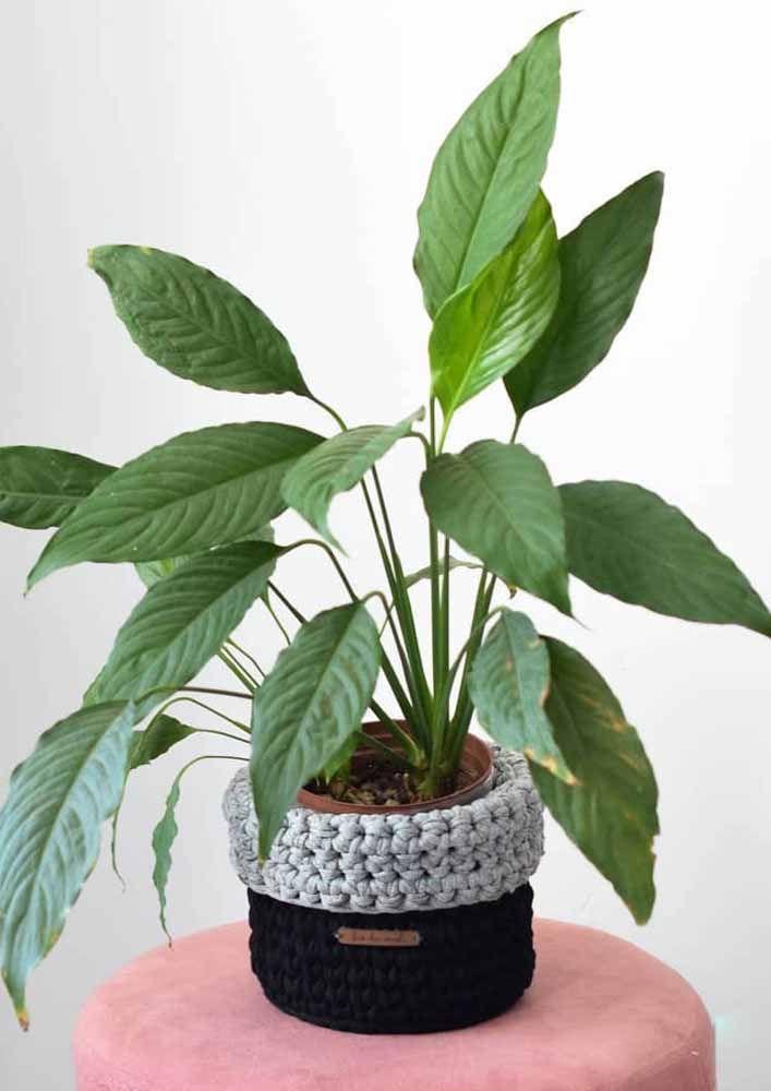 Les cache-pots en crochet sont également à la hausse;  n'oubliez pas d'en retirer la plante lors de l'arrosage